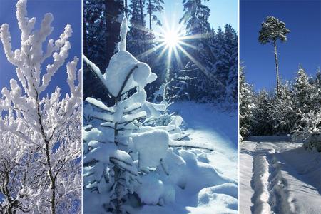 Dreibettzimmer - winterlichen Wald, schneebedeckten Bäumen Lizenzfreie Bilder