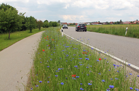 kerb: two way traffic, country road, kerb with corn flowers