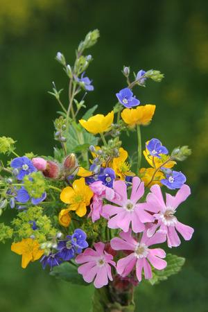 alchemilla: piccolo posy wildflower con Lychnis, ranuncoli, veronica, Alchemilla