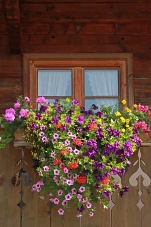 farmstead window with colorful flower box, petunias and geranium