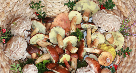 basket with variety of boletus and lingonberries photo