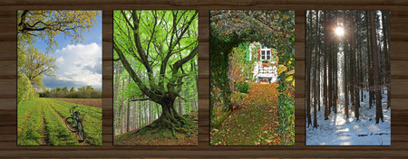 Collage - four seasons on wooden board background. rural spring landscape, knaggy tree, garden view, wintry forest. photo