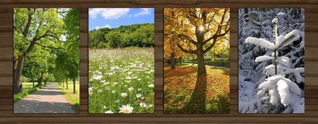 estaciones del a�o: Collage - cuatro temporadas en el fondo de madera bordo. callej�n primavera, Prado de la margarita, �rbol de haya como iluminaci�n de fondo, la nieve cubre abeto.
