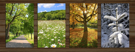 Collage - four seasons on wooden board background. spring alley, marguerite meadow, beech tree back lighted, snow covered fir tree. Stock Photo