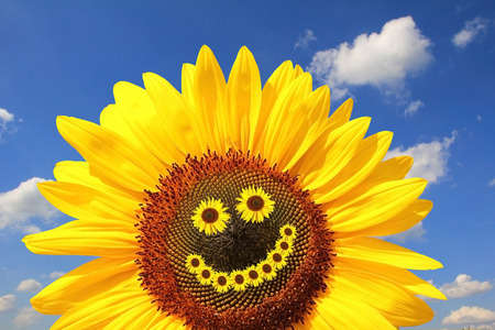 bright sunflower with smiling face, against blue sky with clouds Zdjęcie Seryjne