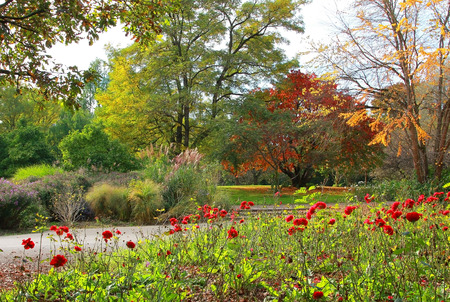 perennials: beautiful autumnal park with red roses and colorful perennials