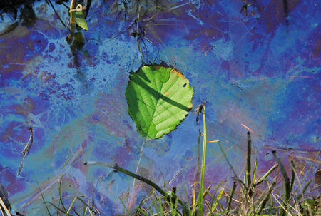 contaminated water with swimming leaf, environmental pollution Foto de archivo