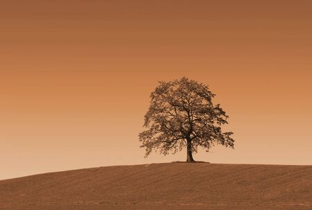 browns: lonely autumnal oak tree on the hill, soft browns.