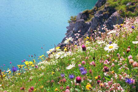 fleurs des champs: variété de fleurs sauvages, paysage côtier avec de l'eau turquoise