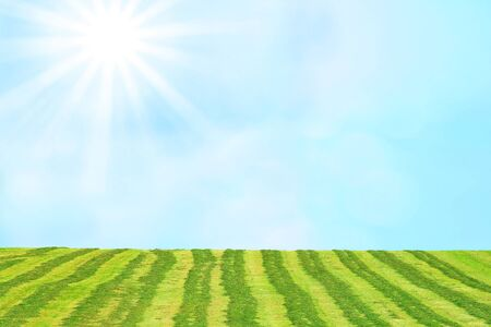 hay field: hay field and airy sky with bright sunshine, agricultural background Stock Photo