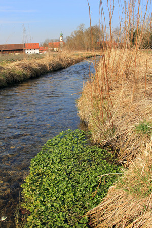 fresh watercress in a brook, rural landscape germany photo