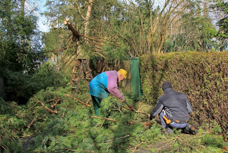 gardeners clear the road from rolled trees after the storm Standard-Bild