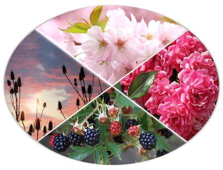 turn of the year: four seasons circle III - cherry blossoms, rose bush, blackberries, whorlflower