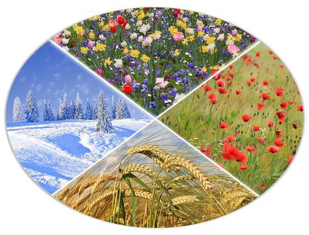 winter wheat: four seasons circle II - springtime flowerbed, cornfield with poppies, wheat field, winter landscape