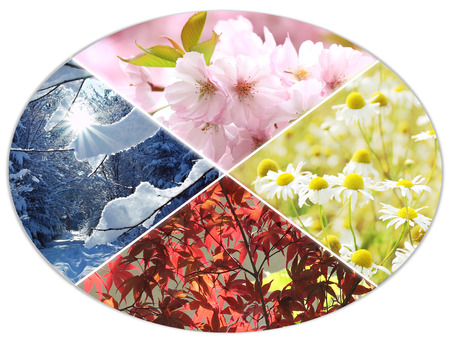 blooms: four seasons circle V - cherry blooms, chamomile flowers, autumnal leaves, wintry forest Stock Photo