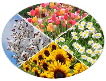 snow covered: four seasons circle VI - tulip field, daisy meadow, sunflowers, snow covered rose hip bush