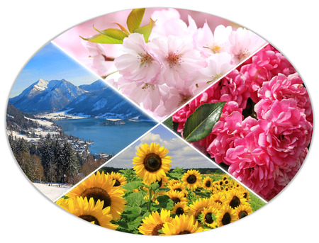 pink hills: four seasons circle XI - cherry bloom, mountain landscape, sunflowers, roses