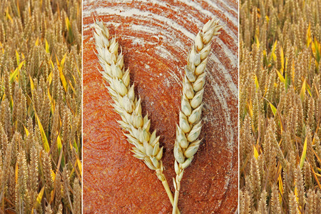 wholesome: Collage - loaf of wholesome bread and golden wheat ears