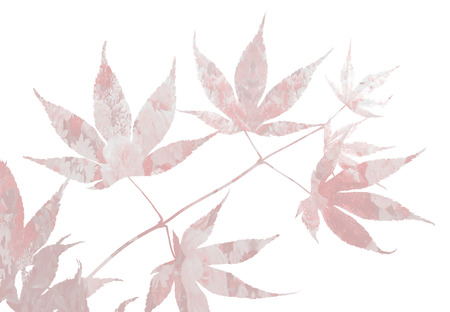 japanese maple: japanese maple twig with floral design, on white background