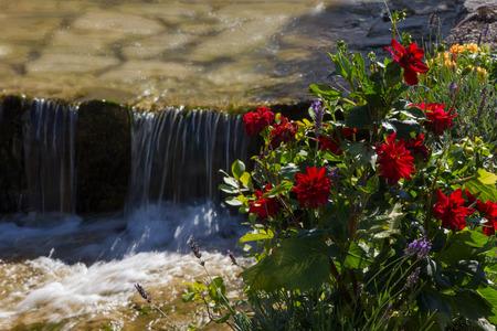 runnel: red dahlia flowers beside mountain creek Stock Photo