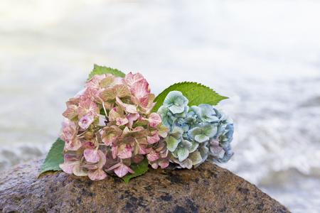 despedida: flores de hortensia en una piedra en la playa, escena de despedida Foto de archivo