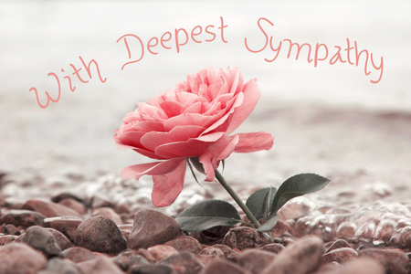 one rosy rose flower at the stony beach, text - with deepest sympathy Stockfoto