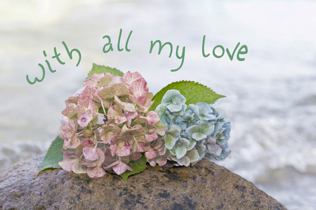 sympathy: hydrangea blossoms and wavy water background, sympathy design with text Stock Photo