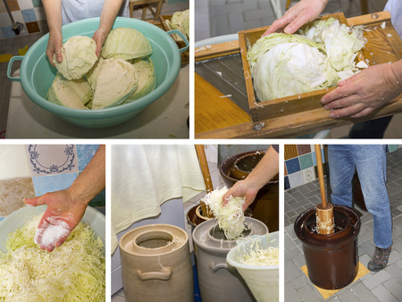 quarters: preparing sauerkraut in 5 steps - slice cabbage into quarters, shape cabbage, salting, put into earthenware, tamping in layers