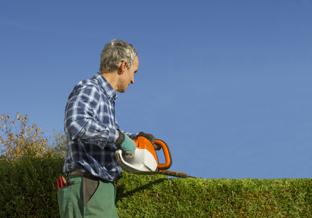 gardener pruning thuja hedge with electric hedge clippers