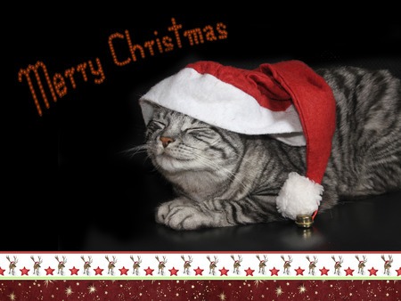 christmassy: tabby cat with saint nicholas cap. christmas card design with christmassy border