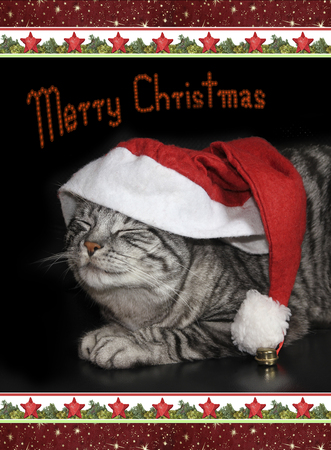 christmassy: cute tabby cat with saint nicholas cap. christmas card design with christmassy border with merry christmas text