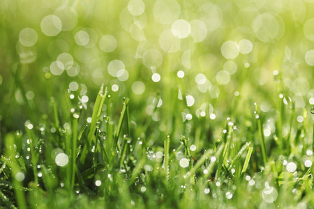 narrow depth of field: green grass with morning dew and lens flares background, narrow depth of field.
