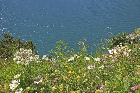 fleurs des champs: variété de fleurs sauvages au lac alpin rivage Lünersee, autriche. Banque d'images