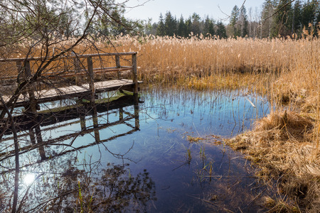 fount: blue fount in the swamp, tourist attraction lake osterseen, bavarian nature preserve