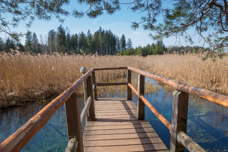 fount: wooden boardwalk with view to blue fount in the swamp, moor lake osterseen, bavaria