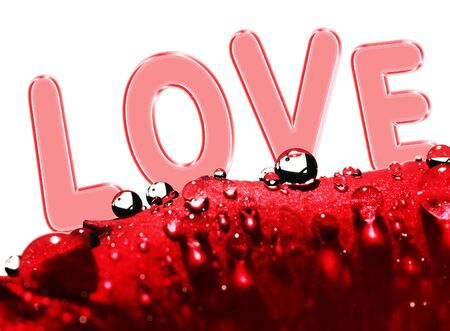 dew: red rose with dew drops and love message on white background Stock Photo