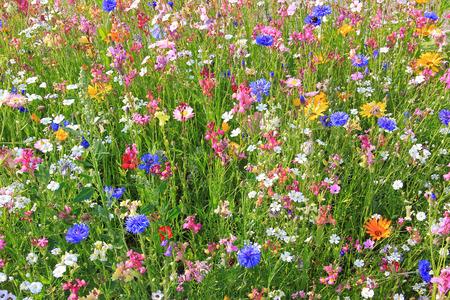 다양 한 화려한 꽃과 아름 다운 꽃 초원, 꿀벌을위한 사료 식물.