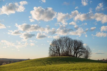 lighted: lighted hill with group of trees in the evening sun, blue sky with cumulus clouds