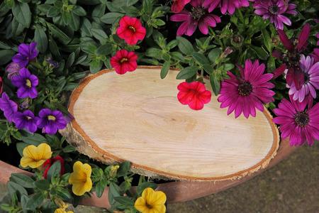 petunias: tree slice with copy space on a flowerpot with petunias Stock Photo