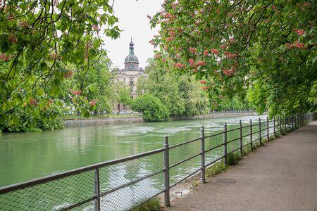 riverside trees: riverside walkway under red chestnut trees beside isar river munich, upper bavaria