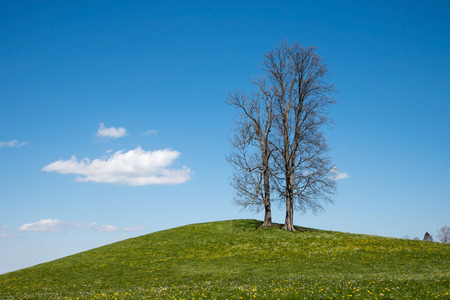 two faced: bare faced trees standing at a green hill, blue sky with clouds
