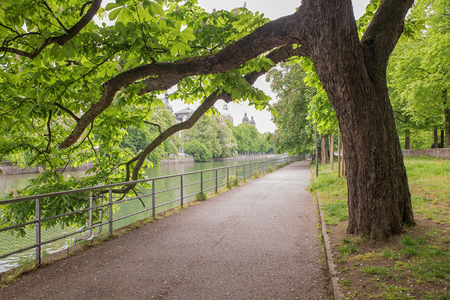 riverside trees: riverside walkway under old chestnut trees beside isar river munich, upper bavaria Stock Photo