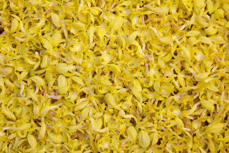 medical plant: closeup of yellow archangel - lamium galeobdolon, alternative medical plant