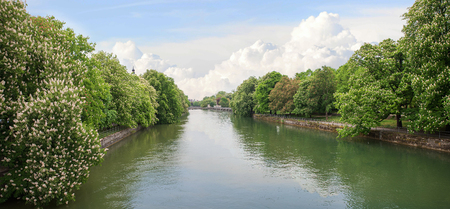 riverside trees: beautiful riverside of isar river munich, with overhanging blooming chestnut trees in may Stock Photo