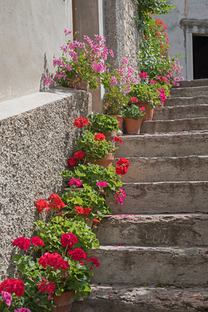 old stone staircase with geranium flowerpots Stock Photo