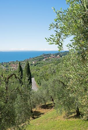 olive groves: mediterranean landscape with olive groves at the lake shore garda lake and gargnano village,