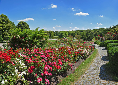 west germany: beautiful city park with blooming rose flowerbed and walkway at munich west park, germany Stock Photo