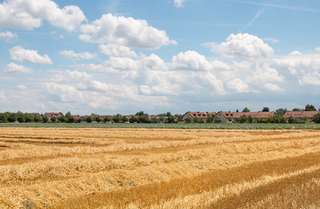 outskirts: harvested field with straw at the outskirts of the village