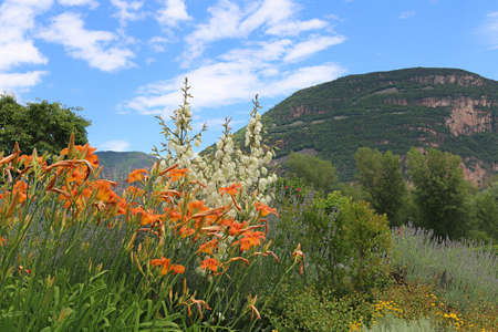 italian landscape: italian landscape with mediterranean plants - day lily and yucca