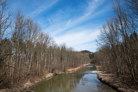 riverside trees: mangfall river with bare trees at the riverside, early springtime landscape bavaria